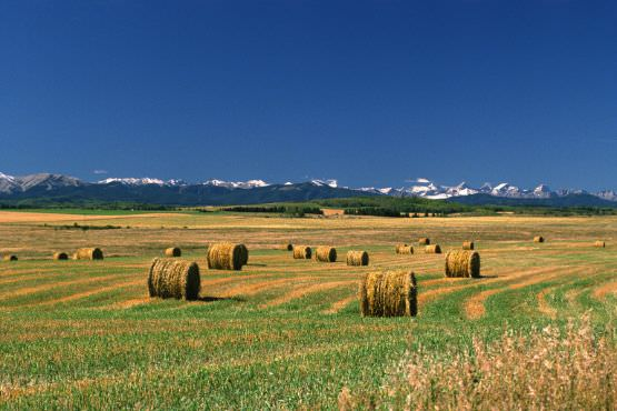 Hay bales with Rocky Mountains in background