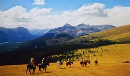 Western Pack Trips and Cattle Drives